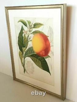 Williams-sonoma/pottery Barn Blood Orange Wall Art New Sold Out At Ws/pb Rare