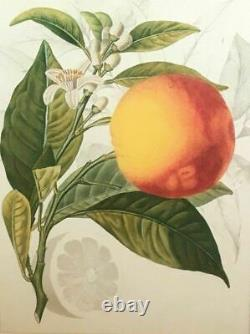Williams-sonoma / Poterie Barn Blood Orange Wall Art Nouveau Vendu À Ws/pb Rare